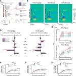 Long-Lasting Input-Specific Experience-Dependent Changes of Hippocampus Synaptic Function Measured in the Anesthetized Rat