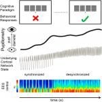 Back to Pupillometry: How Cortical Network State Fluctuations Tracked by Pupil Dynamics Could Explain Neural Signal Variability in Human Cognitive Neuroscience