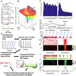 Information Theoretic Approaches to Deciphering the Neural Code with Functional Fluorescence Imaging