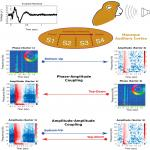 Signature Patterns for Top-Down and Bottom-Up Information Processing via Cross-Frequency Coupling in Macaque Auditory Cortex