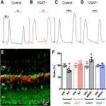 Targeted Deletion of Vesicular GABA Transporter from Retinal Horizontal Cells Eliminates Feedback Modulation of Photoreceptor Calcium Channels