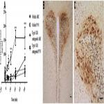 The Arcuate Nucleus: A Site of Fast Negative Feedback for Corticosterone Secretion in Male Rats