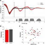 Closed-Loop Acoustic Stimulation Enhances Sleep Oscillations But Not Memory Performance