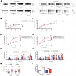 Nociceptor Sensitization Depends on Age and Pain Chronicity
