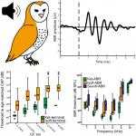 Gas Anesthesia Impairs Peripheral Auditory Sensitivity in Barn Owls (<em>Tyto alba</em>)