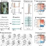 Behavioral and Neural Variability of Naturalistic Arm Movements