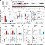 Dynamic and Sex-Specific Changes in Gonadotropin-Releasing Hormone Neuron Activity and Excitability in a Mouse Model of Temporal Lobe Epilepsy