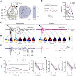 General Anesthesia Disrupts Complex Cortical Dynamics in Response to Intracranial Electrical Stimulation in Rats