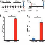 RNA from Trained <em>Aplysia</em> Can Induce an Epigenetic Engram for Long-Term Sensitization in Untrained <em>Aplysia</em>