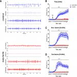 CA3 Synaptic Silencing Attenuates Kainic Acid-Induced Seizures and Hippocampal Network Oscillations
