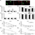 The Role of Interleukin-10 in Mediating the Effect of Immune Challenge on Mouse Gonadotropin-Releasing Hormone Neurons <em>In Vivo</em>