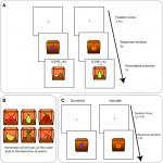 Conflicted between Goal-Directed and Habitual Control, an fMRI Investigation