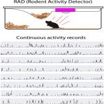 Rodent Activity Detector (RAD), an Open Source Device for Measuring Activity in Rodent Home Cages