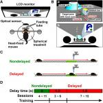 Hippocampus-Dependent Goal Localization by Head-Fixed Mice in Virtual Reality
