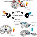 Avoidant Responses to Interpersonal Provocation Are Associated with Increased Amygdala and Decreased Mentalizing Network Activity