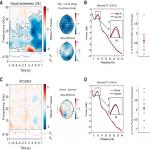 Prestimulus EEG Power Predicts Conscious Awareness But Not Objective Visual Performance