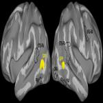 "Following Eye Gaze Activates a Patch in the Posterior Temporal Cortex That Is not Part of the Human ""Face Patch"" System"
