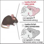 Overexpression of Parkinson's Disease-Associated Mutation LRRK2 G2019S in Mouse Forebrain Induces Behavioral Deficits and α-Synuclein Pathology