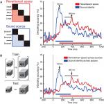 Hearing Scenes: A Neuromagnetic Signature of Auditory Source and Reverberant Space Separation