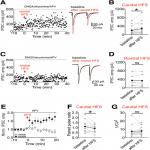 Synaptic Plasticity at Inhibitory Synapses in the Ventral Tegmental Area Depends upon Stimulation Site