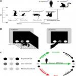 Divergent Solutions to Visual Problem Solving across Mammalian Species