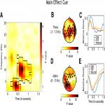 Oscillatory Correlates of Intentional Forgetting: The Role of Theta and Alpha Power in Item-Method Directed Forgetting
