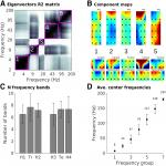 Large-Scale and Multiscale Networks in the Rodent Brain during Novelty Exploration