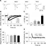 Neuronal and Astrocytic Monoacylglycerol Lipase Limit the Spread of Endocannabinoid Signaling in the Cerebellum