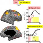 The Neural System of Postdecision Evaluation in Rostral Frontal Cortex during Problem-solving Tasks